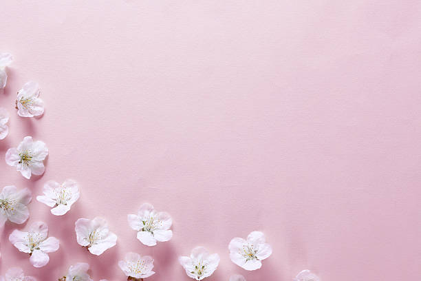 cherry blossom border - sakura background stock photos and pictures