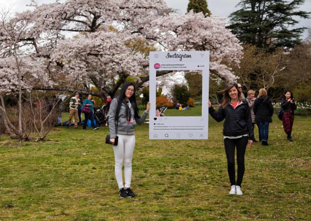 cherry blossom fesitval in queen elizabeth park, vancouver, canada - instagram стоковые фото и изображения