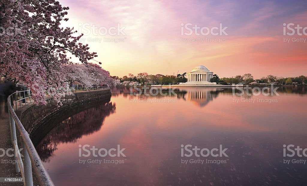 cherry blossom festival in Washington D.C. stock photo