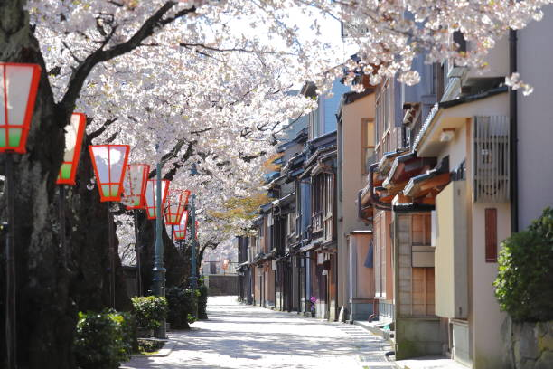 Cherry blossom Higashiyama teahouse old house street Kanazawa Japan Cherry blossom Higashiyama teahouse old house street Kanazawa Japan tea room stock pictures, royalty-free photos & images