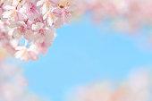 桜、ブルースカイ