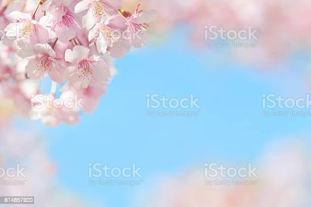 Cherry blossom in blue sky picture id614857920?b=1&k=6&m=614857920&s=612x612&h=kguj8dzrwq1ocaetkm z5umnfpeubwlmfasfjvqot 8=