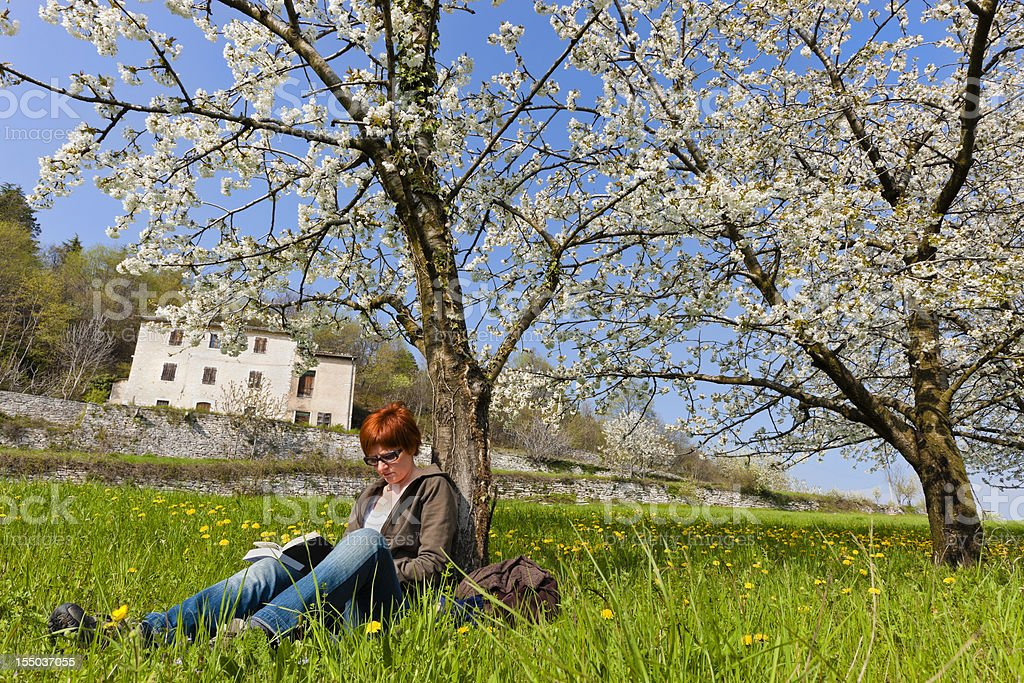 Cherry Blossom in Valpolicella, Italy royalty-free stock photo