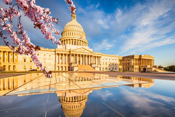 Cherry blossom in Washington DC stock photo