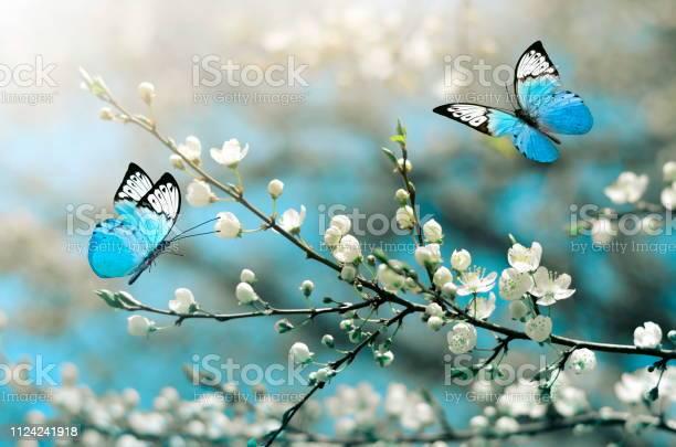 Cherry blossom in wild and butterfly springtime picture id1124241918?b=1&k=6&m=1124241918&s=612x612&h=eyhcfelds8mkus2lrj6eyxnjfeykqv7ugqswpl0alc4=