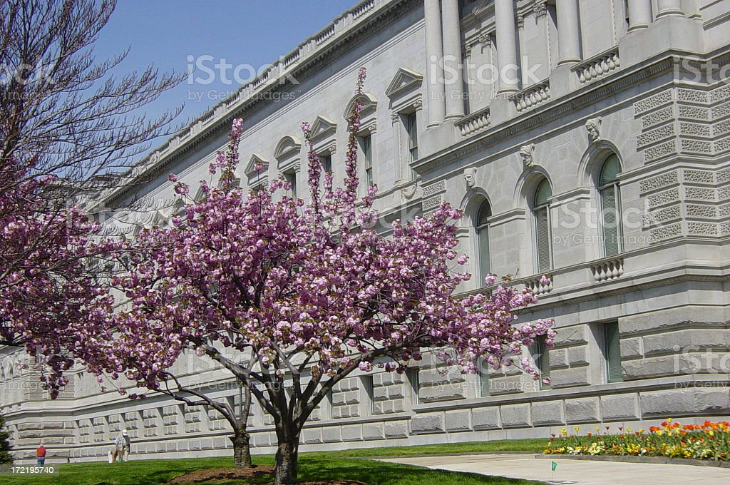 Cherry Blossom & Library of Congress royalty-free stock photo