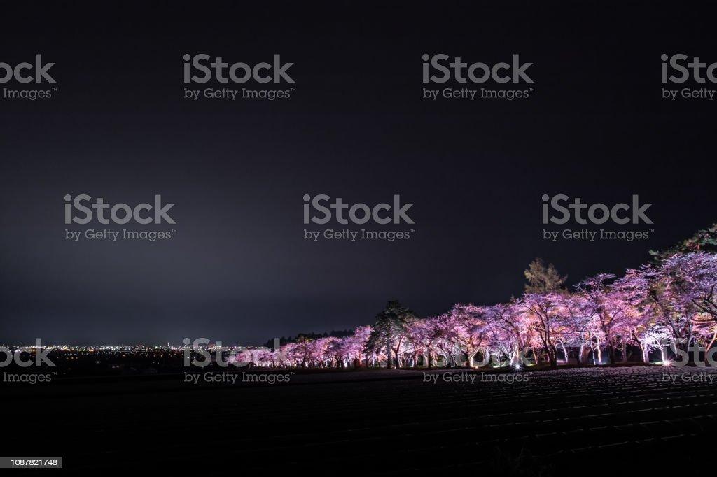 桜の名所北海道のライトアップ ストックフォト