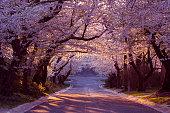 Cherry blossom neighborhood