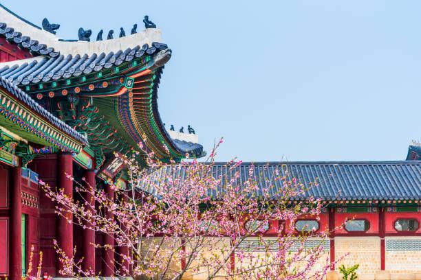 Flor de cerezo de la primavera en el Palacio de Gyeongbokgung. Seúl, Corea del sur. - foto de stock