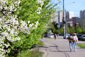 Urban landscape with blooming trees and walking people at spring sunny day
