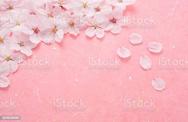 Cherry blossom on pink background picture id626509582?b=1&k=6&m=626509582&s=612x612&h=ytucgqgxbjzsl0tbppfi4wjnrd7ke1tlrpssbqlbyjk=