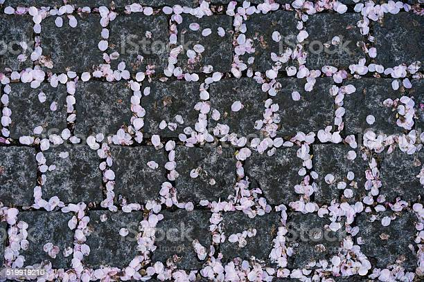 Cherry blossom petal falling onto pattern rock ground picture id519919210?b=1&k=6&m=519919210&s=612x612&h=guae83eg3bvhqquk1rhi yqbgkchn7aaejuprcnfzbe=