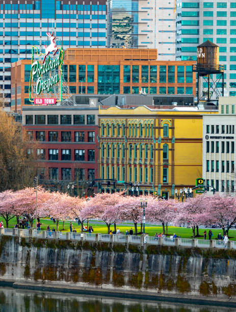 Kirschblüte Portland Oregon Oldtown. – Foto
