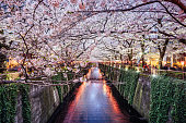 Cherry blossom season in Tokyo at Meguro river