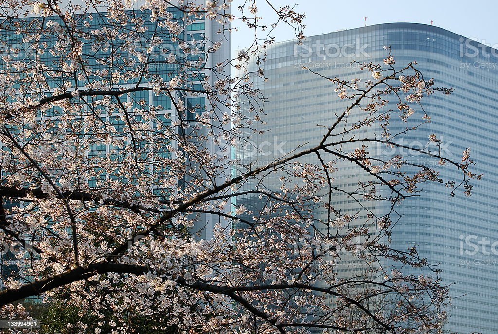 Cherry Blossom Tokyo Japan royalty-free stock photo