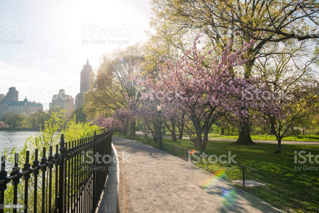 Cherry Blossom Trees Line Idyllic Spring Path Central Park NYC photo libre de droits