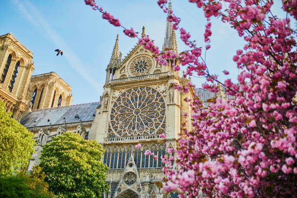Cherry blossom trees near Notre-Dame cathedral in Paris, France stock photo