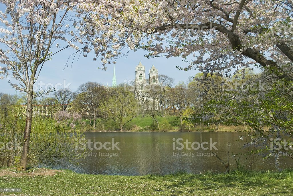 Cherry Blossom View royalty-free stock photo