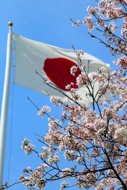 Flor de cerezo con bandera japonesa - foto de stock
