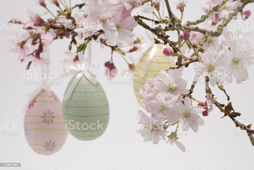 Cherry blossom with paper eggs royalty-free stock photo