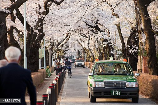 825525754istockphoto Cherry Blossoms Adorn Tokyo as People Celebrate