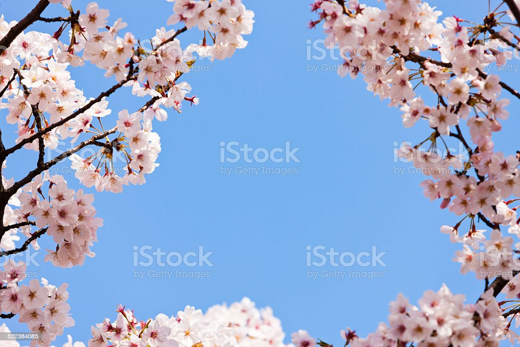 how to delete cherry blossoms account