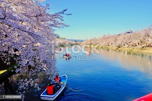 People boating in the cherry blossoming river