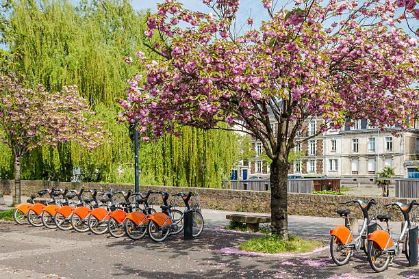 fleurs de cerisier et des vélos dans le parc, nantes.france, 11/04/2014 - nantes photos et images de collection