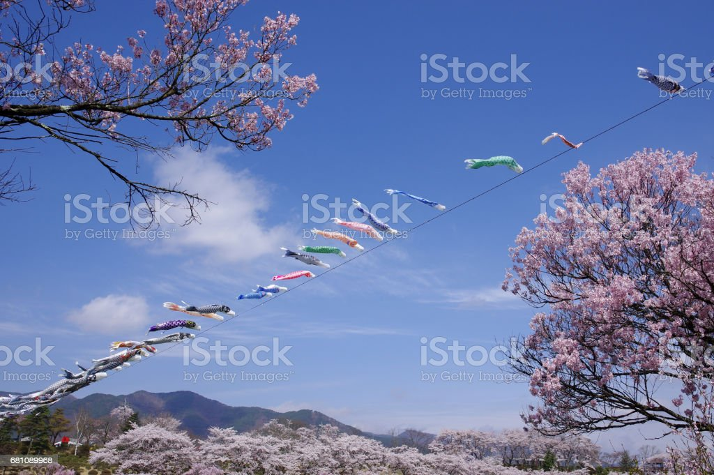Cherry blossoms and carp streamers royalty-free stock photo