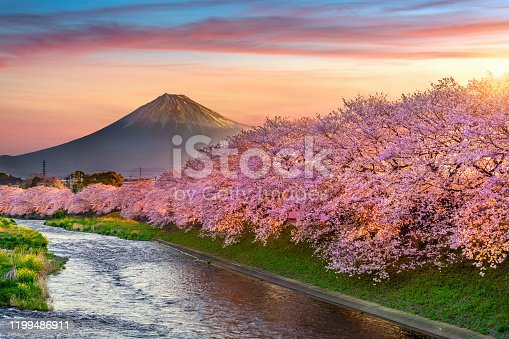 istock Cherry blossoms and Fuji mountain in spring at sunrise, Shizuoka in Japan. 1199486911