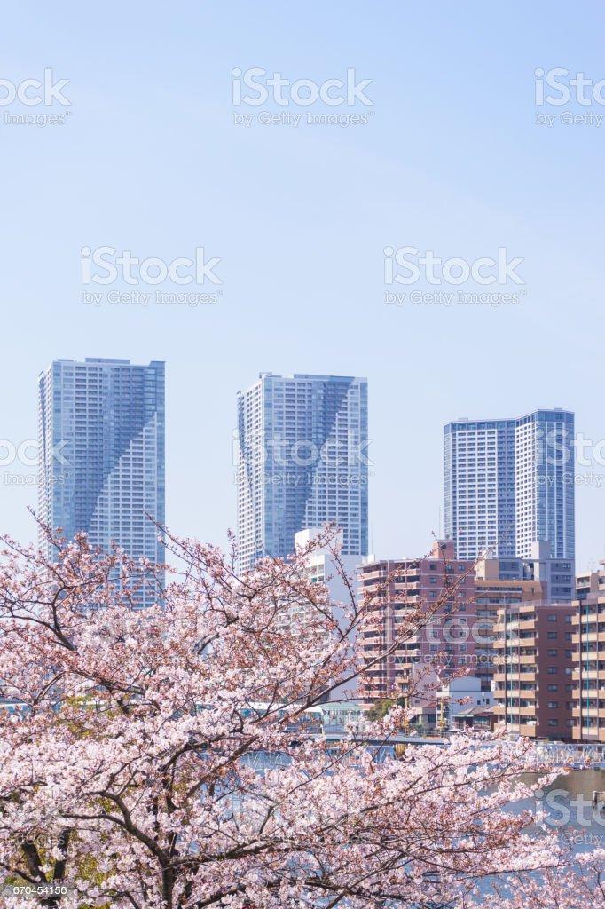 桜と高層アパートメント ストックフォト
