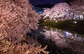 桜弘前市公園