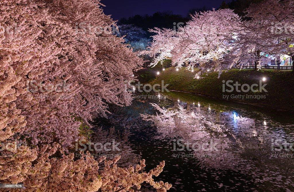 Cherry blossoms and Hirosaki Park stock photo