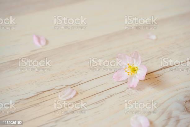 Cherry blossoms and petals that fell to the floor picture id1132035152?b=1&k=6&m=1132035152&s=612x612&h=dfxkddubj9mgvjknlrddadz9gjxi3v3xkvaaciondki=