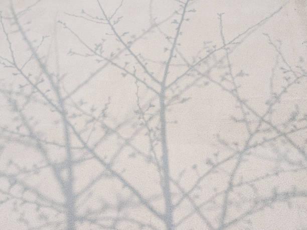 kirschrote blüten und schatten an wand, wie traditionelle chinesischen malerei. - pflaumen wände stock-fotos und bilder