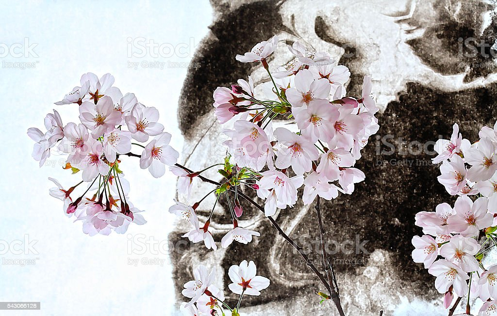cherry blossoms and sumi drawing stock photo