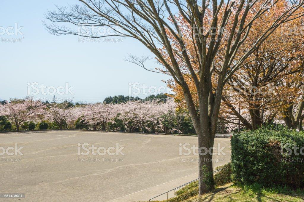 Kersenbloesem in Ashitaka atletisch park royalty free stockfoto