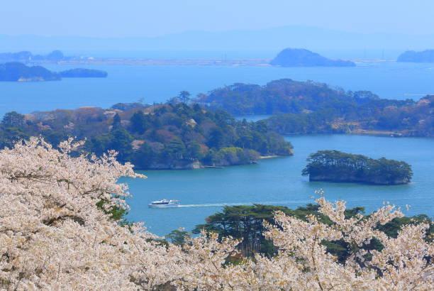 cherry blossoms at matsu park, back of matsushima nishiyuki - cherry blossoms imagens e fotografias de stock