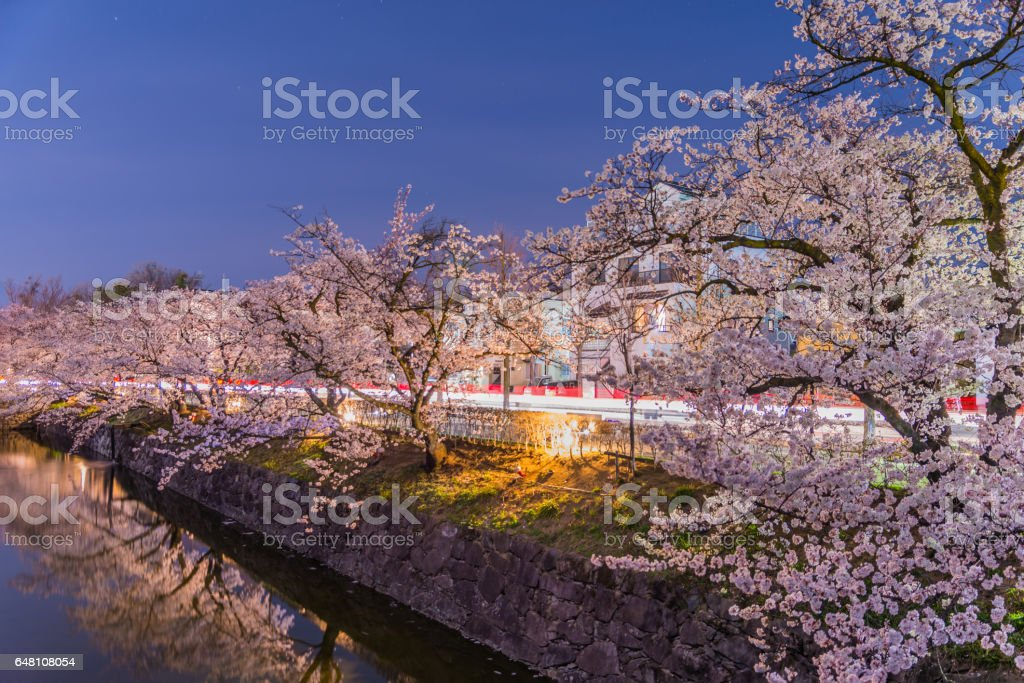 Cherry Blossoms at night in Matsumoto,Japan stock photo
