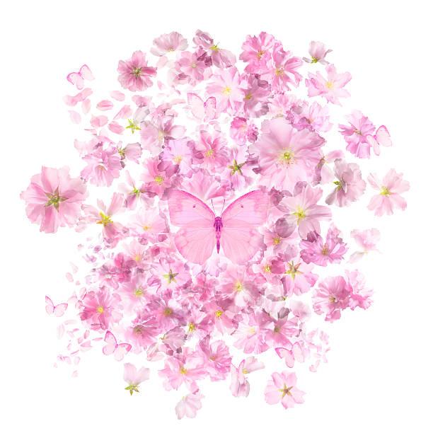 Cherry blossoms bunch butterflies picture id508319080?b=1&k=6&m=508319080&s=612x612&w=0&h=ljjx0kdcvgbjntei2diel7crwsrrijyganzmnerzlzi=