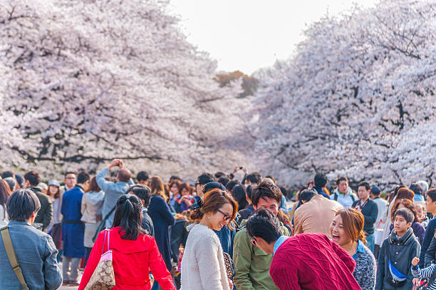 cherry blossoms festival in ueno park,tokyo,japan - 特別な日 ストックフォトと画像