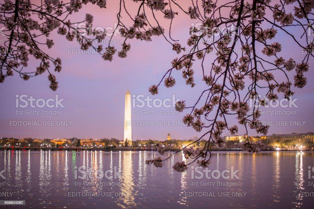 Flores De Cerezo Enmarcan El Monumento A Washington Y El Monumento A ...