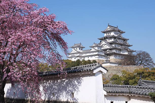 kirschblüten no castelo de himeji - cherry blossoms imagens e fotografias de stock
