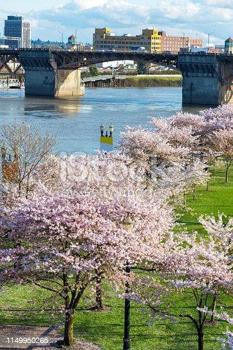 istock Cherry Blossoms in Portland, Oregon 1149950265