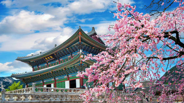 Cherry blossoms in spring, Seoul in Korea. stock photo