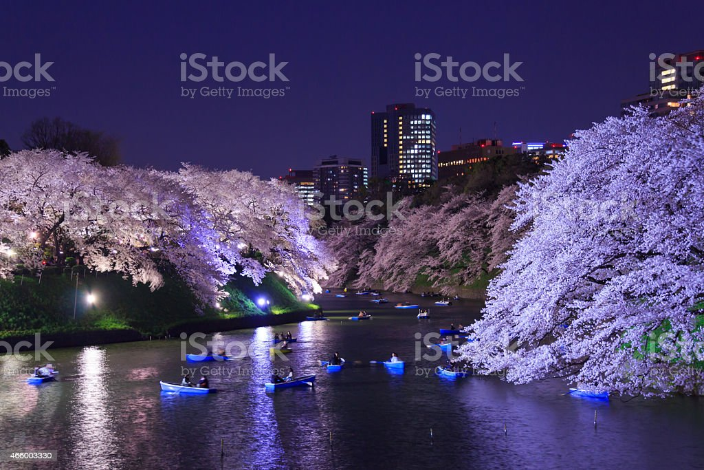 Cherry blossoms in Tokyo, Japan stock photo