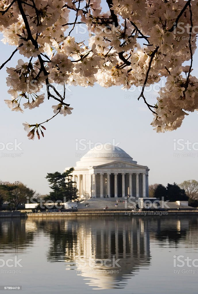 Cherry Blossoms in Washington, D.C. royalty-free stock photo