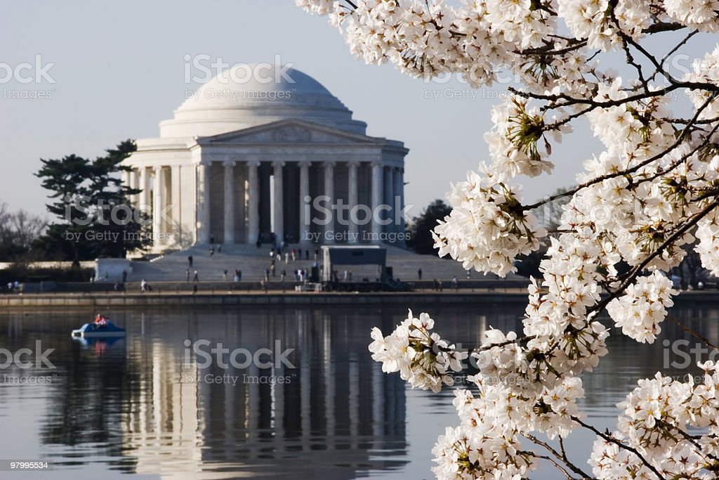 Cherry Blossoms in Washington DC royalty-free stock photo