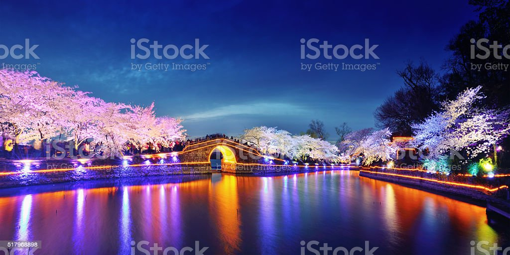 Cherry Blossoms Lush Open Season stock photo