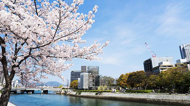 wiśnia kwiaty lub sakura i rzeki w hiroshima - hiroshima zdjęcia i obrazy z banku zdjęć